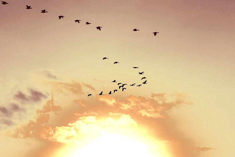 800pxSunsetbirdsHolland21eb910c985c9bd2ee7d4c75eee252b4.jpeg