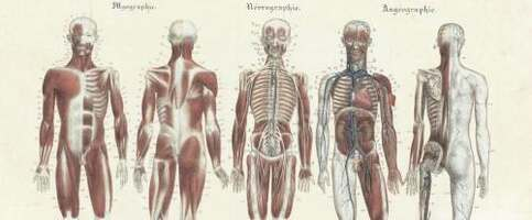Hermaphrodite Anatomy